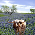 Bluebonnet Field and Longhorn Steer by Penny Odom