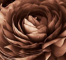 Blooming buttercup II by bij0ux