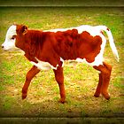 Baby Calf without her Mama by Debbie Robbins