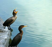 Double-Crested Cormorant by Jeannine St-Amour