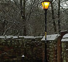 Lamplight by Steve  Wallace