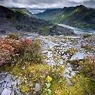 North Wales : Slate & Flowers by Angie Latham