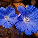 blue enchantment by andrew j wrigley