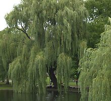 Garden Willow Tree Over Water by photosbycoleen