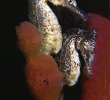 Sea Horse Siblings by Bill Atherton