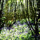Bluebell wood at Powder Mill. by Visuddhi