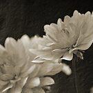 Vintage White Blossoms by Jen Waltmon