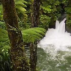 Tutea Falls on the Kaituna River by Brendon Doran