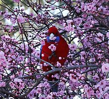 A Rosella Among the Blossoms by Leisa Caldwell