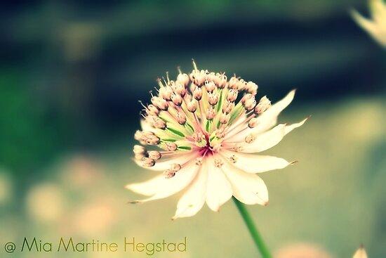 Precious by miamartine