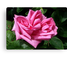 Pink Rose #1 Canvas Print
