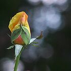 roses prayer... by aspectsoftmk
