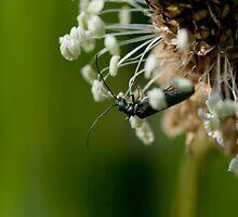 Bugsy by SarinaGito