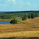 Foothills of the Ozarks by Susan Blevins