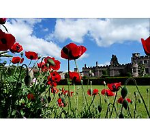 The Dancing Poppies Photographic Print