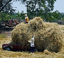 Hay ! by Dave Lloyd