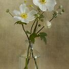Japanese Anemonies by Mandy Disher