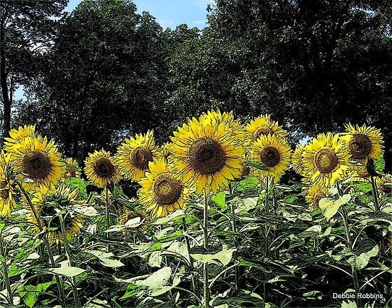 Sketchy Sunflowers ~ Make A Wish Fundraiser by Debbie Robbins