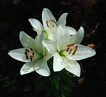 Eye-liner Lilies 2010 by RoyceRocks