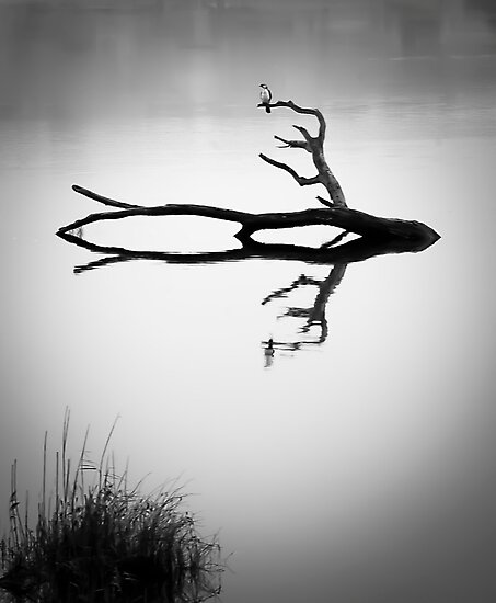lonely bird -  Derwent river Tasmania by lee Henley