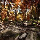 Fall Is Here by Daniel Wills