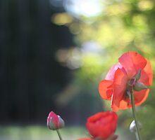 """Patience is the companion of wisdom."" ~ St. Teresa of Avila by Kahlia Huddleston"