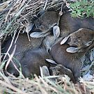 A Nest of Bunnies by Lynn  Gibbons