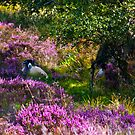 Resting amongst the Heather by Trevor Kersley