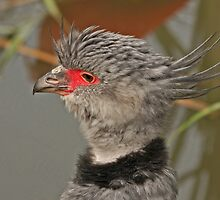 Southern Screamer by Robert Abraham