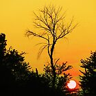 setting sun by ANNABEL   S. ALENTON