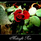 Midnight rose by Maurice Gomez