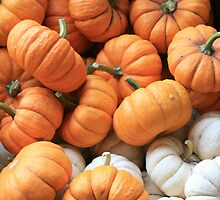 Itsy Bitsy Pumpkins by Victoria  Smith