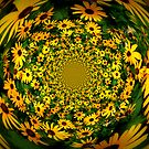 Black Eyed Susan Kaleidoscope by Debbie Robbins