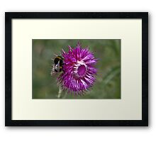 The Thistle & The Bee Framed Print