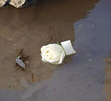 Rose in water by Kerrin Childs