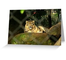 the watched. snow leopard - melbourne zoo Greeting Card