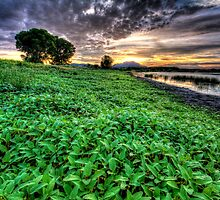 Green Carpet by Bob Larson