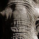 Kruger National Park, South Africa. 2009  III by Damienne Bingham