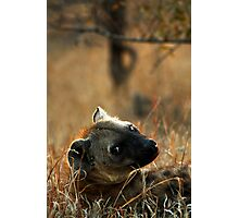 Kruger National Park, South Africa. 2009  V Photographic Print
