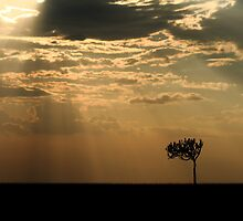 Sunset Over Masai Mara, Kenya II by Damienne Bingham