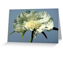 Glorious White Poppy Greeting Card