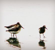 Sandpiper II by DottieDees
