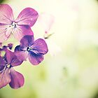 Purplish by mariakallin