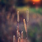 Glowing Grass by mariakallin