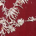 white calligraphy by yvesrossetti