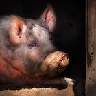 Animal - Pig - Piggy number two by Mike  Savad