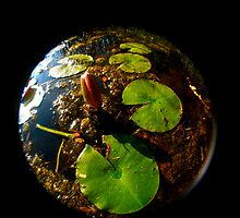 Lily pad flower bud fisheye by JZdezigns