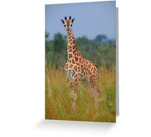 Young Giraffe On Alert Greeting Card