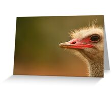 Ostrich Eye Greeting Card