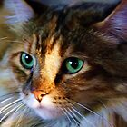 Emerald Stare by Thomas Stevens